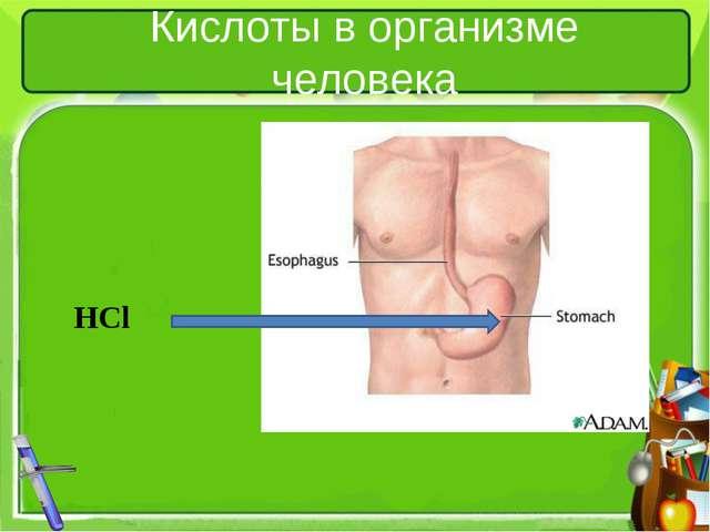 Кислоты в организме человека HCl