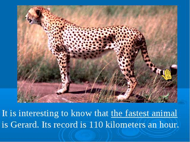 It is interesting to know that the fastest animal is Gerard. Its record is 11...