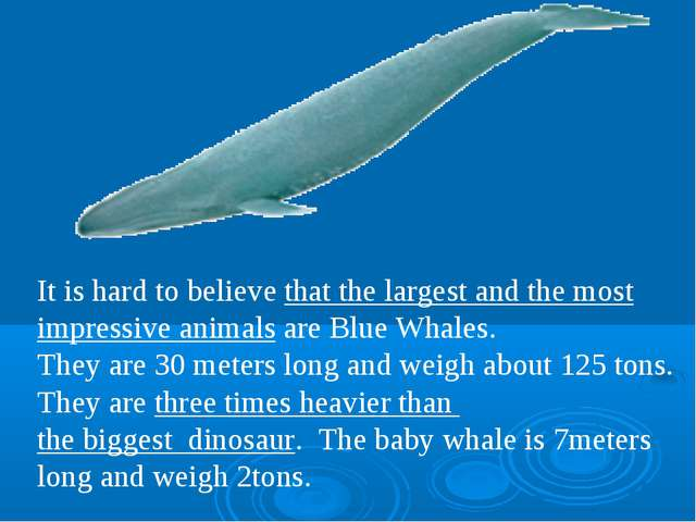 It is hard to believe that the largest and the most impressive animals are Bl...