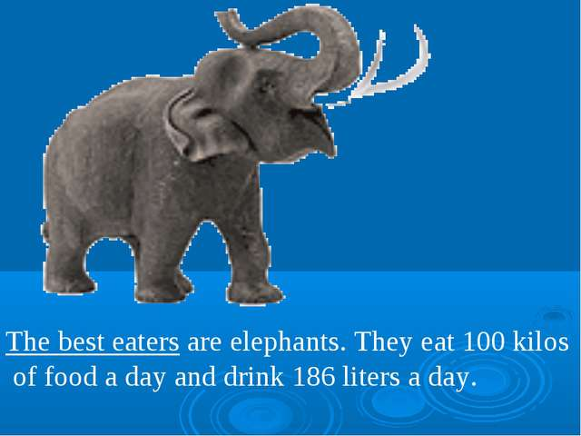 The best eaters are elephants. They eat 100 kilos of food a day and drink 186...