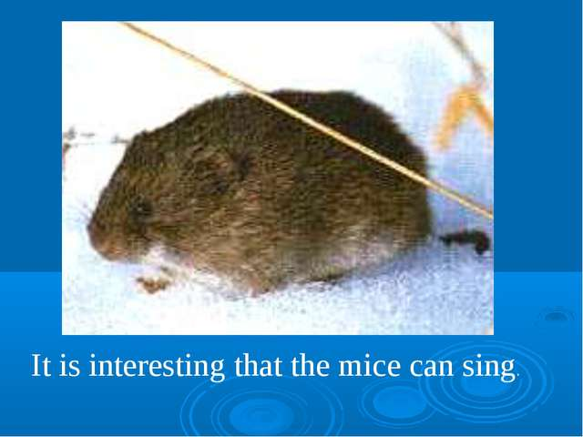 It is interesting that the mice can sing.