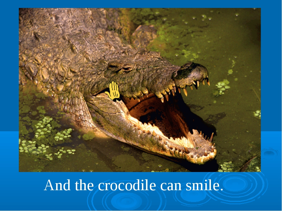 And the crocodile can smile.