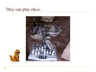 They can play chess.
