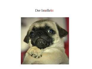Der Intellekt