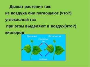 Дышат растения так: из воздуха они поглощают (что?) углекислый газ при этом
