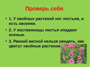 Проверь себя. 1. У хвойных растений нет листьев, а есть хвоинки. 2. У листвен