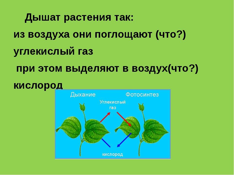 Дышат растения так: из воздуха они поглощают (что?) углекислый газ при этом...