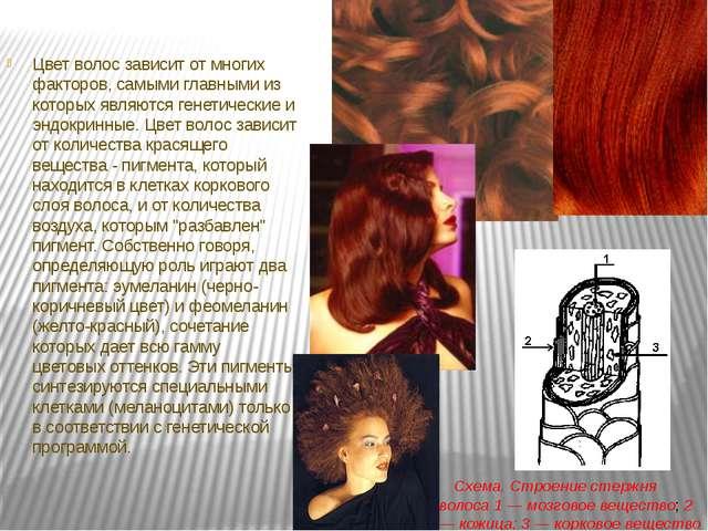 Цвет волос зависит от многих факторов, самыми главными из которых являются г...