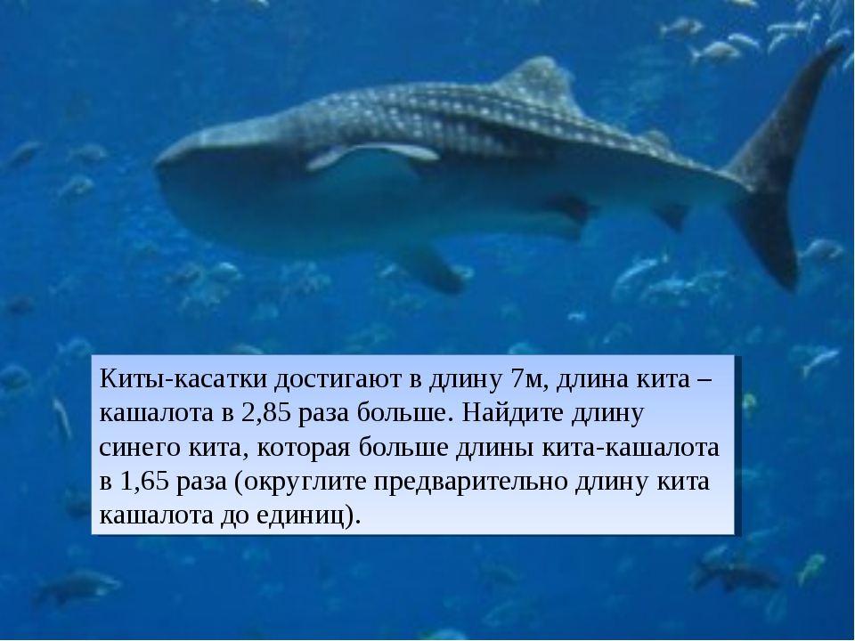 Киты-касатки достигают в длину 7м, длина кита –кашалота в 2,85 раза больше. Н...