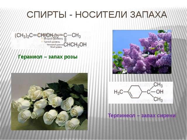 СПИРТЫ - НОСИТЕЛИ ЗАПАХА Гераниол – запах розы Терпинеол – запах сирени