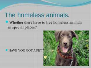 The homeless animals. Whether there have to live homeless animals in special
