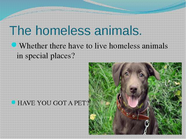 The homeless animals. Whether there have to live homeless animals in special...
