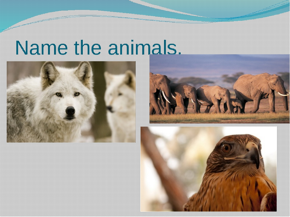 Name the animals.