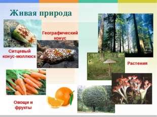 Живая природа Растения Ситцевый конус-моллюск Географический конус Овощи и
