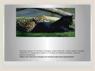 Некоторые думают, что пантеры и леопарды- разные животные: пантера черная, а