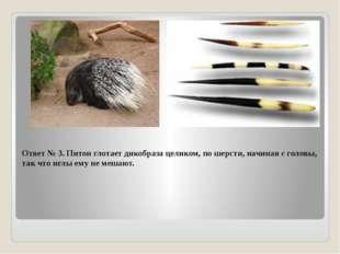 Ответ № 3. Питон глотает дикобраза целиком, по шерсти, начиная с головы, так