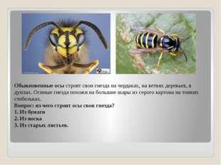 Обыкновенные осы строят свои гнезда на чердаках, на ветвях деревьев, в дуплах