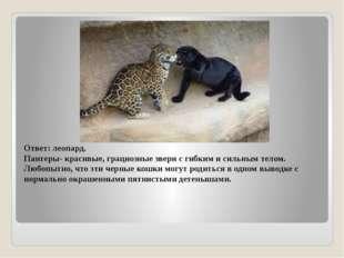 Ответ: леопард. Пантеры- красивые, грациозные звери с гибким и сильным телом.
