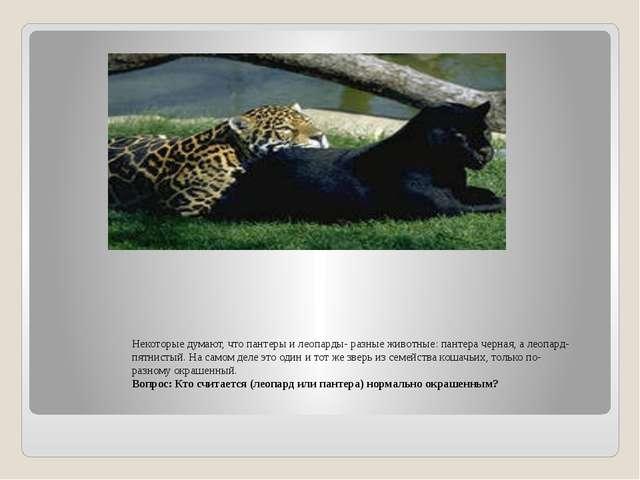 Некоторые думают, что пантеры и леопарды- разные животные: пантера черная, а...