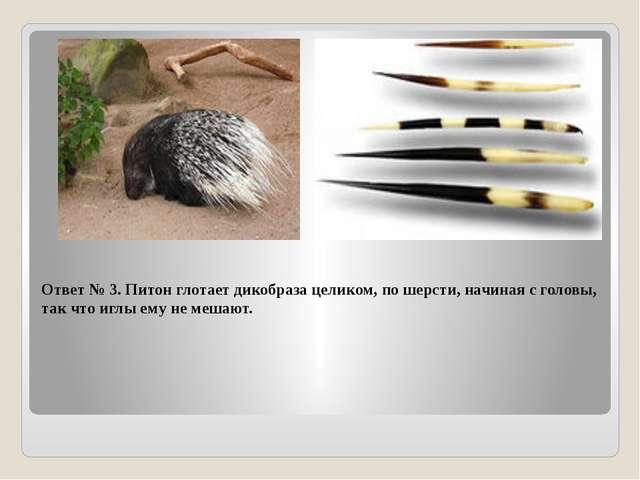 Ответ № 3. Питон глотает дикобраза целиком, по шерсти, начиная с головы, так...