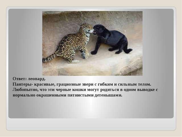 Ответ: леопард. Пантеры- красивые, грациозные звери с гибким и сильным телом....