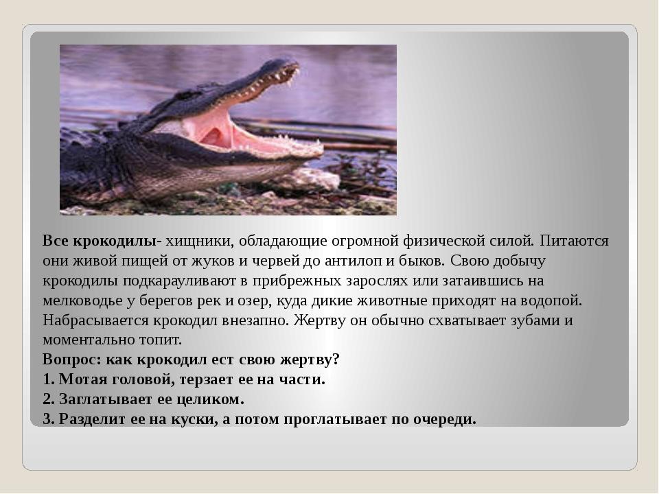 Все крокодилы- хищники, обладающие огромной физической силой. Питаются они жи...