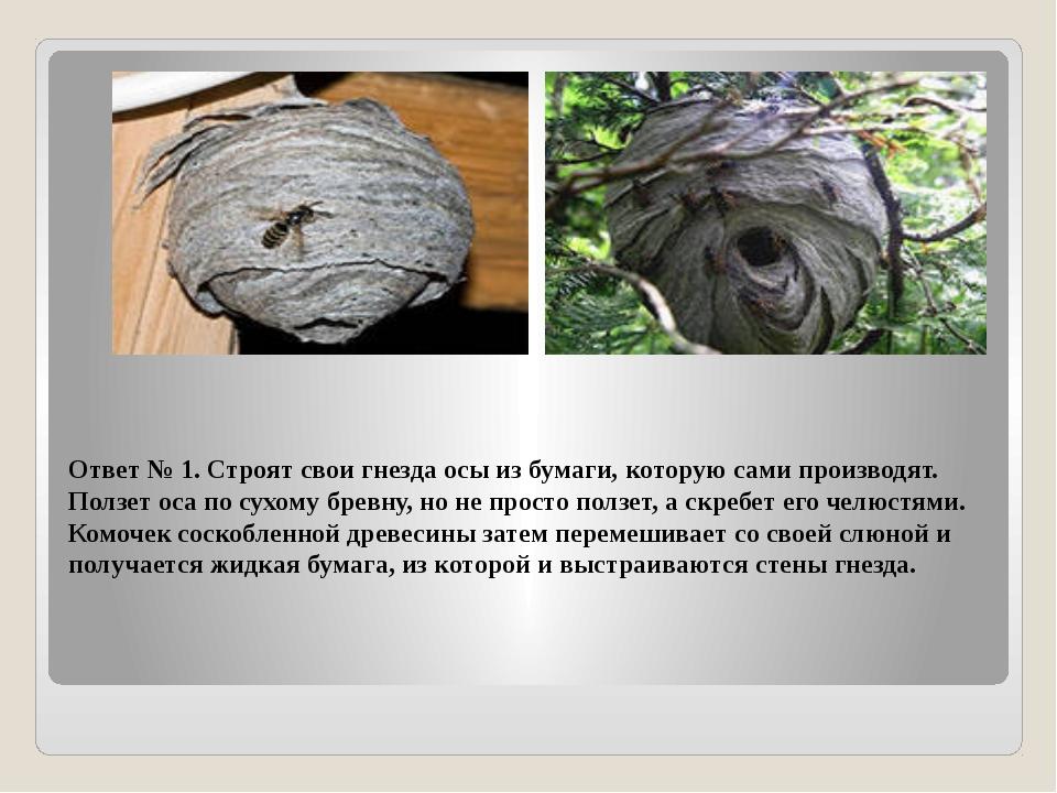 Ответ № 1. Строят свои гнезда осы из бумаги, которую сами производят. Ползет...