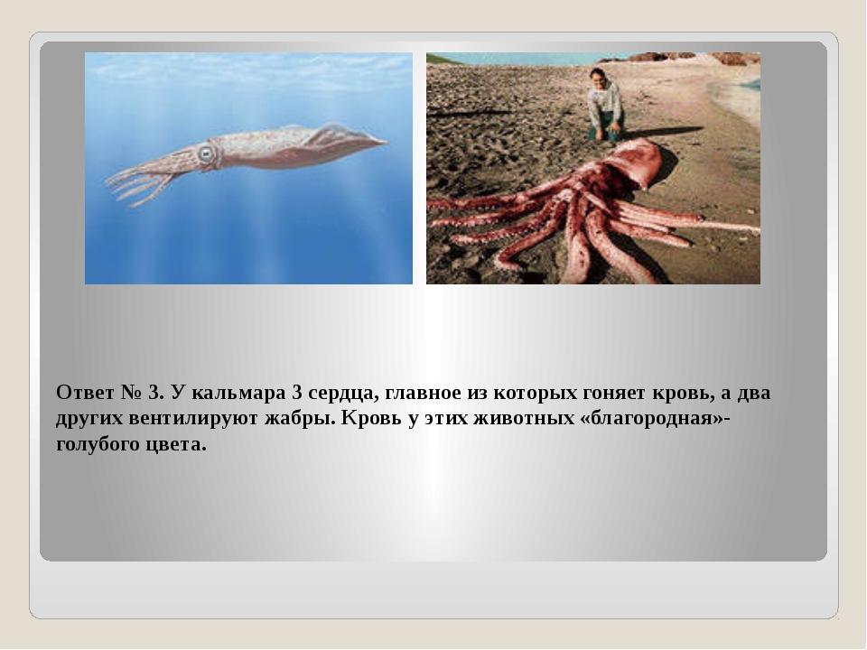 Ответ № 3. У кальмара 3 сердца, главное из которых гоняет кровь, а два других...