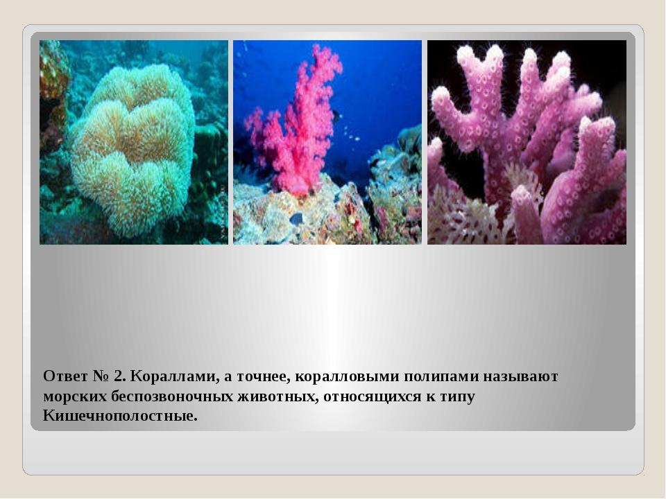 Ответ № 2. Кораллами, а точнее, коралловыми полипами называют морских беспозв...