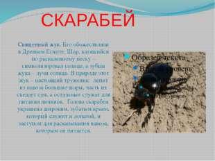 СКАРАБЕЙ Священный жук. Его обожествляли в Древнем Египте. Шар, катящийся по