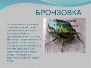 БРОНЗОВКА Это насекомое во все времена очаровывало людей своей окраской и ме