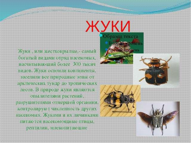 ЖУКИ Жуки , или жесткокрылые,- самый богатый видами отряд насекомых, насчиты...