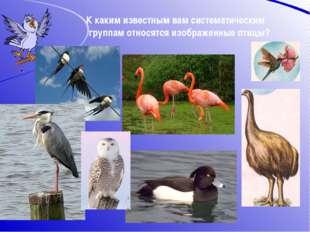 К каким известным вам систематическим группам относятся изображенные птицы?
