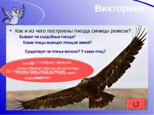 Викторина Как и из чего построены гнезда синицы ремеза? Синица обвивает шерст