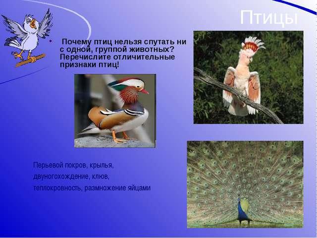 Птицы Почему птиц нельзя спутать ни с одной, группой животных? Перечислите от...