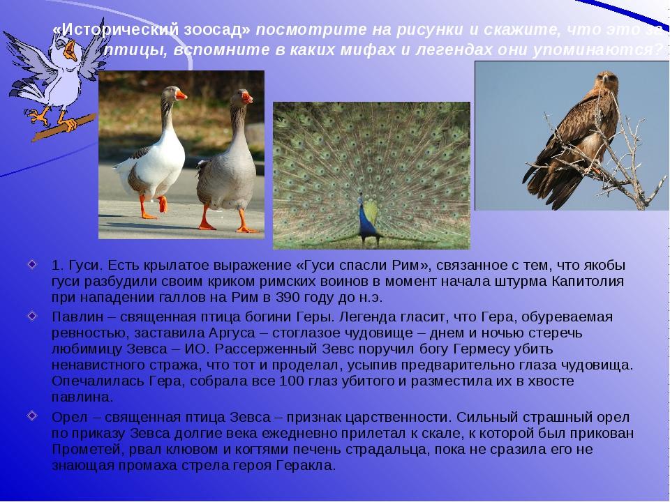 «Исторический зоосад» посмотрите на рисунки и скажите, что это за птицы, вспо...