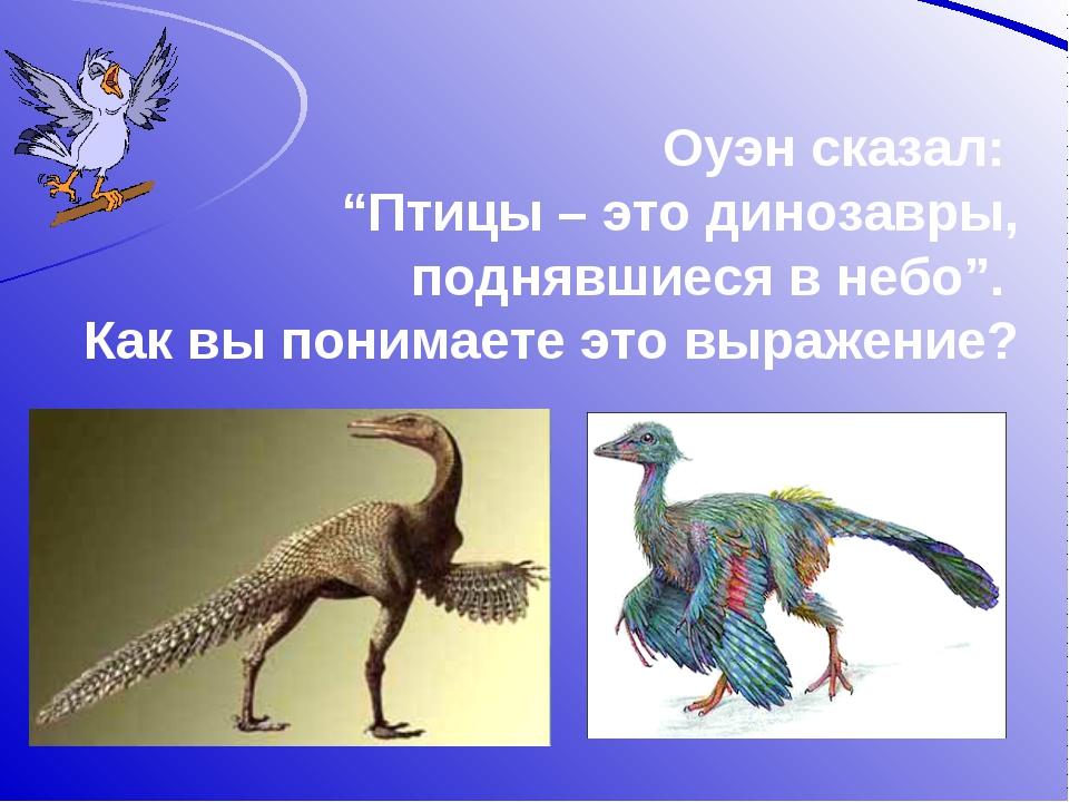 """Оуэн сказал: """"Птицы – это динозавры, поднявшиеся в небо"""". Как вы понимаете эт..."""
