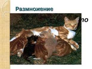 Размножение Размножение – это увеличение числа себе подобных.