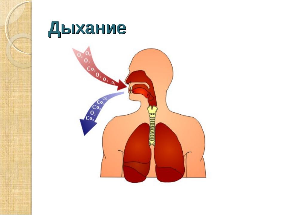 Дыхание Дыхание – это процесс обмена газами между организмом и окружающей сре...