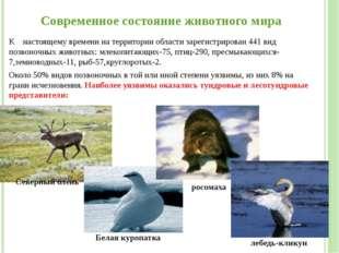 Современное состояние животного мира К настоящему времени на территории облас