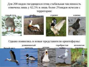 Для 208 видов гнездящихся птиц стабильная численность отмечена лишь у 62,5% и