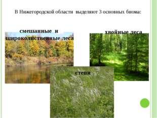 В Нижегородской области выделяют 3 основных биома: хвойные леса степи смешанн