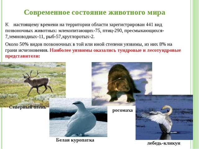 Современное состояние животного мира К настоящему времени на территории облас...