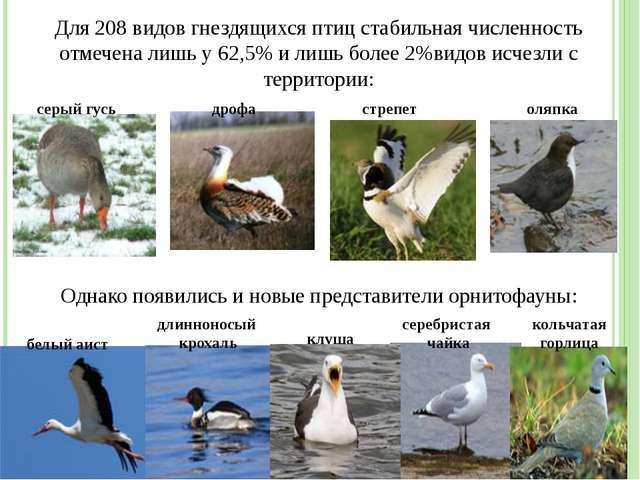 Для 208 видов гнездящихся птиц стабильная численность отмечена лишь у 62,5% и...