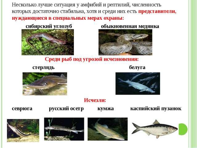 Несколько лучше ситуация у амфибий и рептилий, численность которых достаточно...