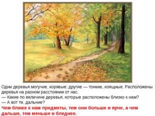 Одни деревья могучие, корявые; другие — тонкие, изящные. Расположены деревья