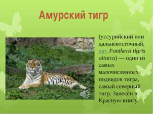 (уссурийский или дальневосточный, лат.Panthera tigris altaica)— один из сам