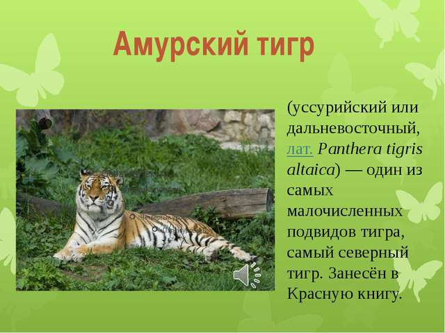 (уссурийский или дальневосточный, лат.Panthera tigris altaica)— один из сам...