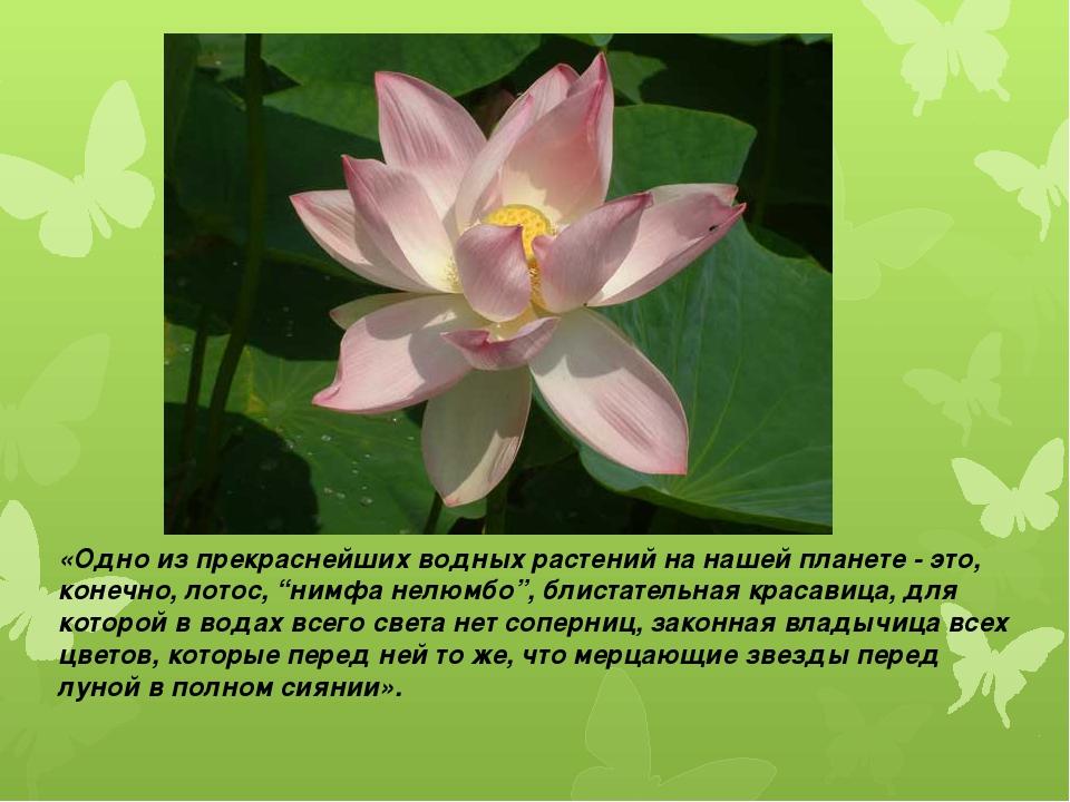 «Одно из прекраснейших водных растений на нашей планете - это, конечно, лотос...