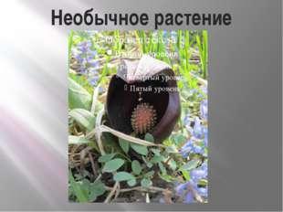 Необычное растение